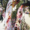 Eucalyptus, Tree, Fallbrook tree