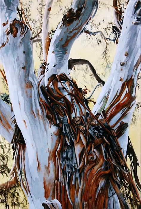 Tree Eucalyptus San Diego Fallbrook